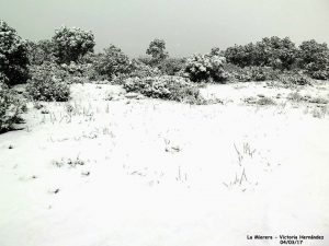Nieve 16