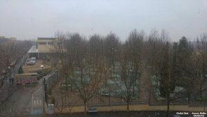 Nieve 49